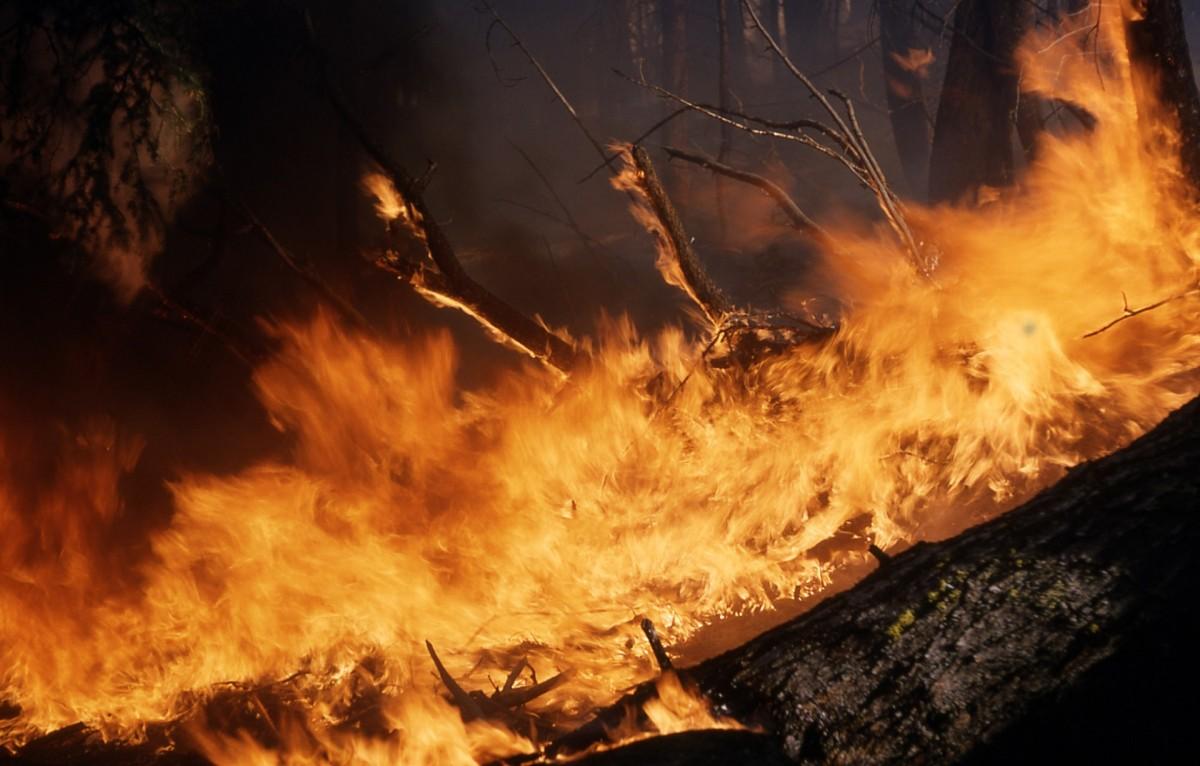Brände in den Regenwäldern